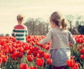 Giardino biologico: gli step necessari per una coltivazione florida ed ecologica