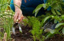 terreno per il giardinaggio