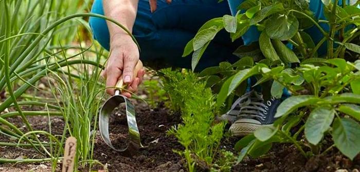 Terreno per il giardinaggio: come scegliere il migliore e quali caratteristiche valutare