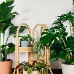 Piante per l'home gardening: le più gettonate del 2019