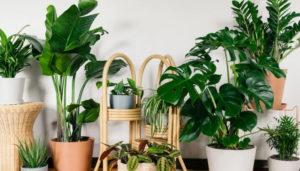 Piante per l'home gardening