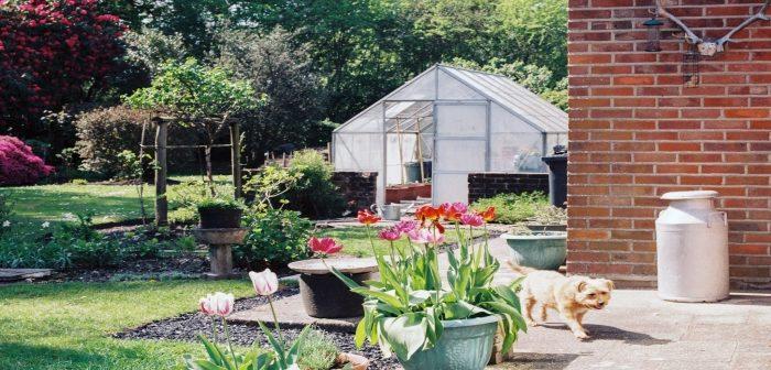 Giardini per cani: come progettare spazi verdi per gli amici a 4 zampe
