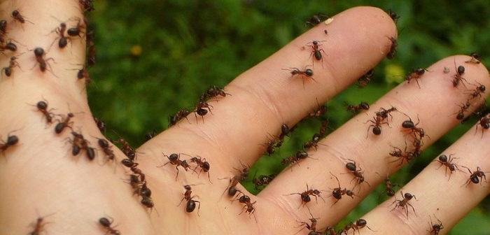 Come eliminare le formiche