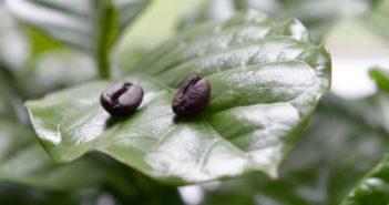 Come usare i fondi di caffè negli orti e nei giardini