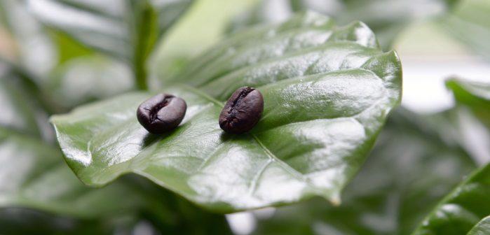 come usare i fondi di caffè in giardino e nell'orto