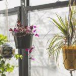 Come realizzare un angolo verde in casa