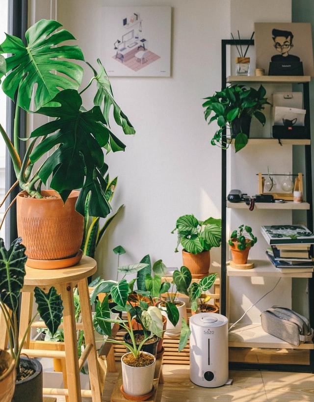 giardino in casa vasi piante