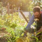I rischi del giardinaggio: come proteggersi da insetti, sole e dolori alla schiena