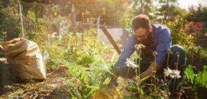 rischi del giardinaggio