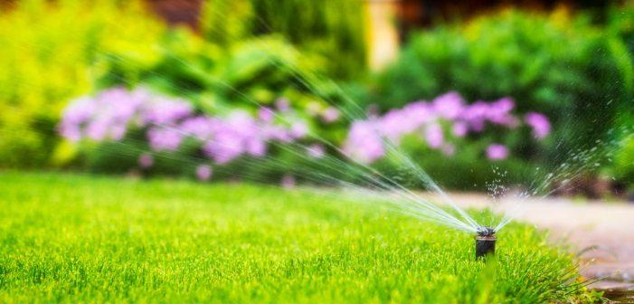 Come risparmiare l'acqua in giardino